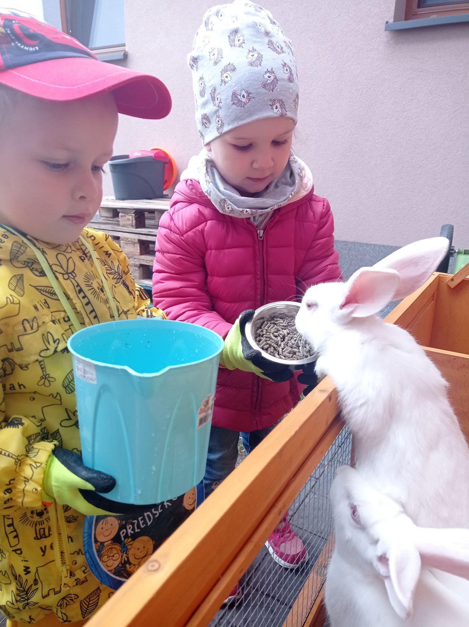 Opieka nad królikami